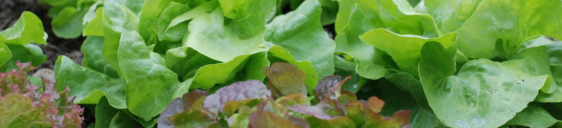 Buehne_Salat