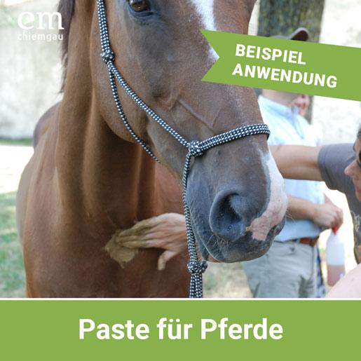Pferdepaste herstellen mit EM-Keramikpulver