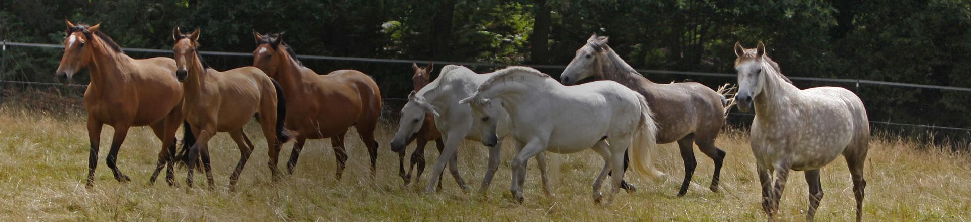 Pferdebühne