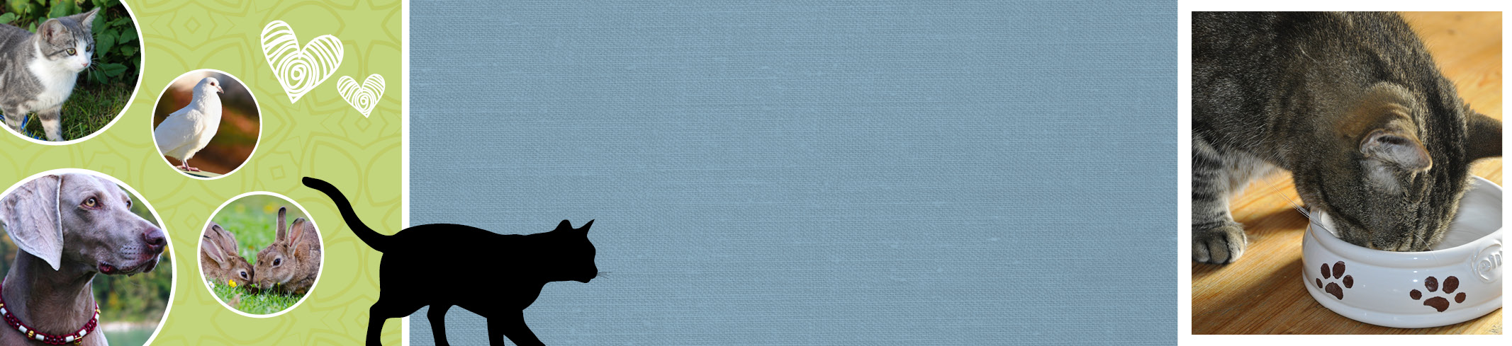 Pflege der Haustiere mit effektiven Mikroorganismen. Natürliche erste Hilfe für Hund, Katze & Co.