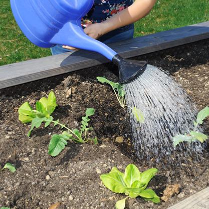 Effektive Mikroorganismen gießen im Garten