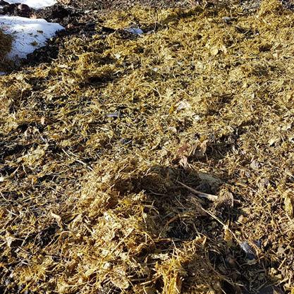 Ausbringen-Rasenschnitt-Herbst-Mulchen-Bokashi