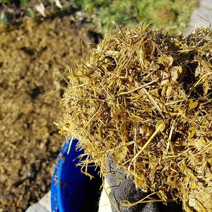 Rasenschnitt-Herbst-Mulchen-Bokashi
