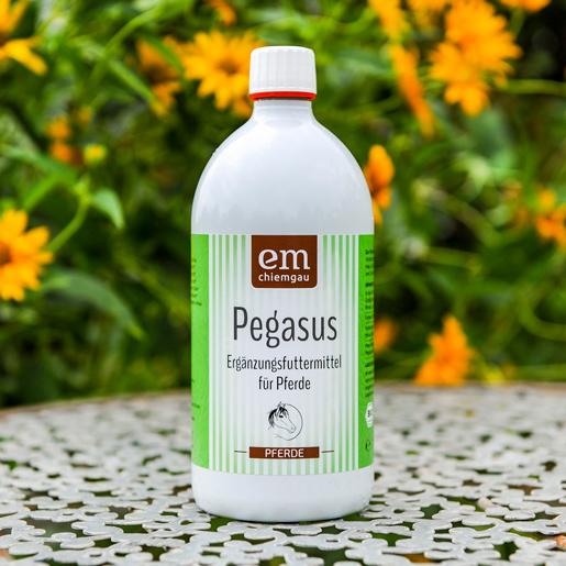 Pegagsus Futterferment in der 1 Flasche in Bio-Qualität